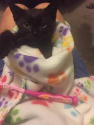 """This little girl is """"The Countess"""", the tiniest kitten in this group"""