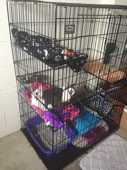Bert and Abby Cadabby in the new 3-tier Cat Playpen