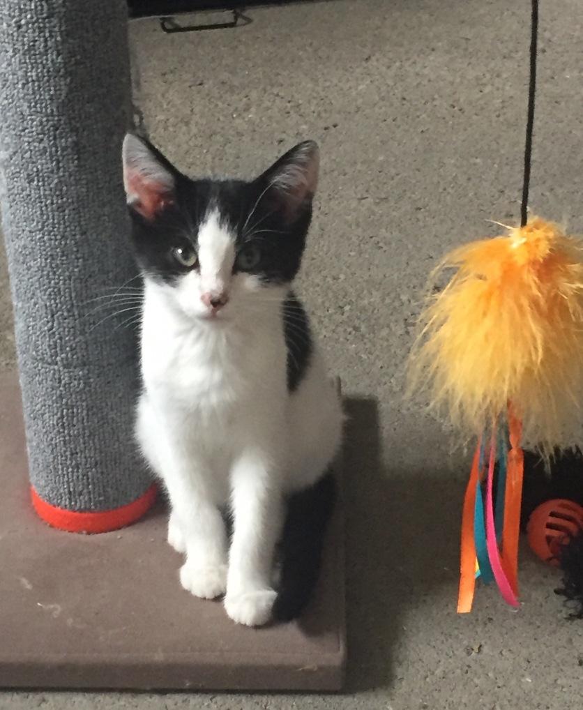 Meet my darling Clementine!