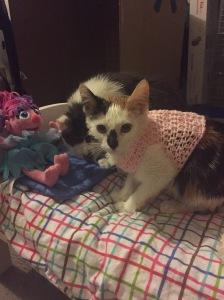 Abby Cadabby modeling a kitten sweater