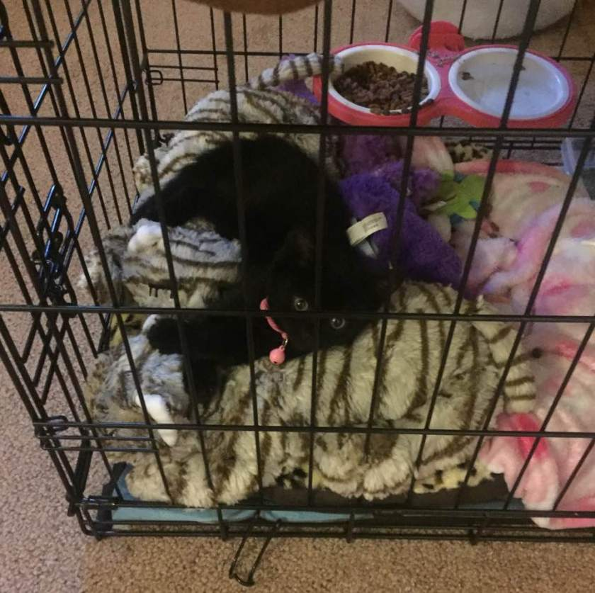 Winnie chillaxin Snuggle Kitty