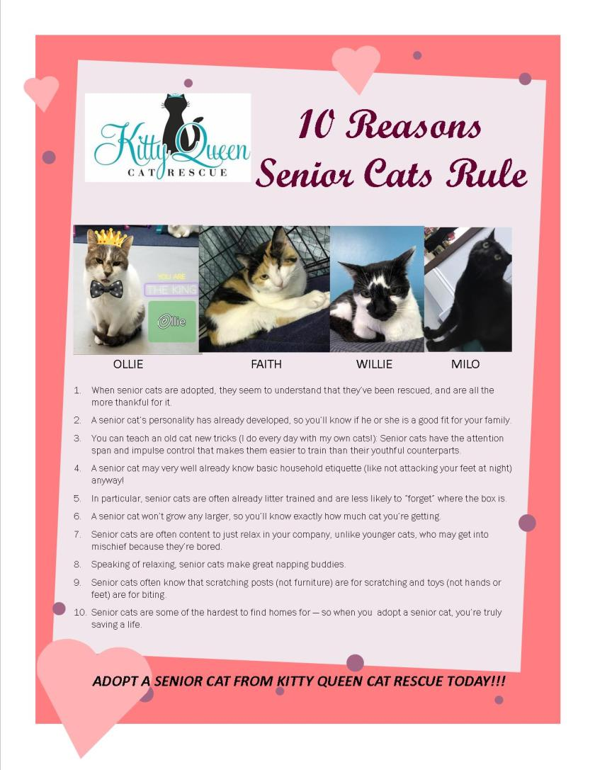 10 reasons senior cats rule